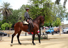 Traditional andalusian horseman Stock Image