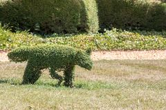 Traditional animal topiary bush. Fox sculpture as a garden ornam Stock Image