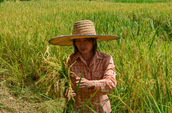 Traditional Asian female farmer Stock Photography