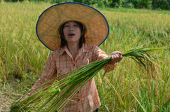 Traditional Asian female farmer Royalty Free Stock Photos