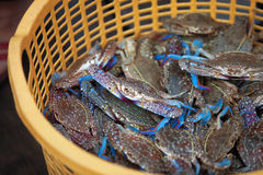 Traditional asian fish market. Stall full of famous cambodian blue crabs Stock Photography