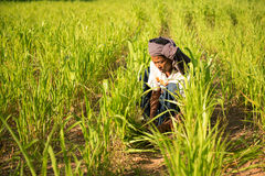 Traditional Asian male farmer working Royalty Free Stock Photography