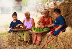 Traditional Asian Thai rural daily life, grandchildren in cultural costumes help their seniors preparing local food ingredients. For the meal. Diversity in age Royalty Free Stock Photos