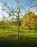 Traditional autumnal orchard Royalty Free Stock Images