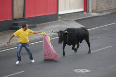 Traditional azores bullfighting feast in Terceira. Azores. Toura Stock Image