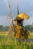 Traditional Balinese house of spirits on rice field Royalty Free Stock Images