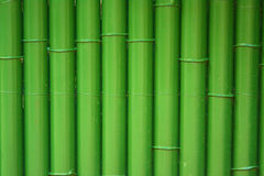 Traditional bamboo fence painted with green Royalty Free Stock Photo