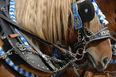 Traditional Bavarian Horse Stock Photos