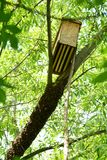 Traditional beekeeping. Caching a bee swarm. Bee swarm on a tree preparing for a new colony royalty free stock photo