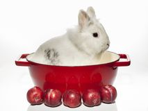 Rabbit with stewed plumes lunch Royalty Free Stock Photo