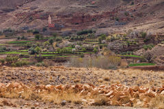 Traditional berber village in Atlas Mountains stock photo