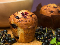 Traditional blackcurrant muffins Royalty Free Stock Photo