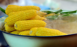 Traditional boiled corn. Royalty Free Stock Photos