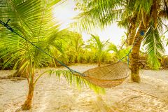 Traditional braided hammock between palm trees in the sun on a tropical beach. Traditional braided hammock between green palm trees on a deserted tropical beach Royalty Free Stock Photography