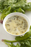 Traditional Bulgarian Spinach Soup Royalty Free Stock Photo
