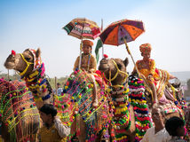 Traditional camel decoration competition at camel mela in Pushka Royalty Free Stock Photos