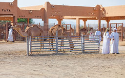 Traditional Camel Market in Al Ain in the UAE Royalty Free Stock Photography