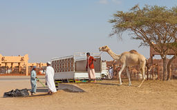 Traditional Camel Market in Al Ain in the UAE royalty free stock photo