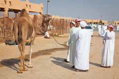 Traditional Camel Market in Al Ain in the UAE Stock Photography