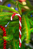 Traditional candy cane on christmas tree. Traditional candy cane hanging on christmas tree Stock Images
