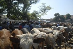 TRADITIONAL CATTLE MARKET Stock Image