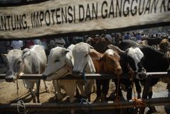 TRADITIONAL CATTLE MARKET Royalty Free Stock Photography