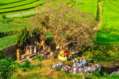Traditional ceremony on rice field near Tirtagangga in Bali, Ind Royalty Free Stock Images
