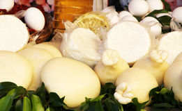 Traditional cheese, ricotta, caciotta Stock Image