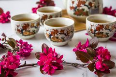 Traditional cherry blossom decorated Japanese tea set filled with green tea and fresh red cheery blossom. Against white marble background. Copy space,  healthy royalty free stock photo