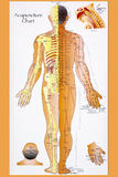 Traditional Chinese Acupuncture Chart. Acupuncture Chart - Acupuncture is a system of complementary medicine that involves pricking the skin with needles, used Royalty Free Stock Images