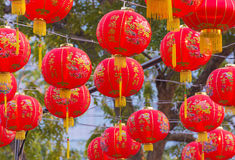 Traditional Chinese lantern hanging on tree in public park Stock Image