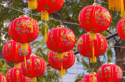 Traditional Chinese lantern hanging on tree in public park Royalty Free Stock Photo