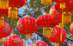 Traditional Chinese lantern hanging on tree in public park Royalty Free Stock Images