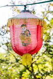 Traditional Chinese lantern. One Latern in the chinese garden Stock Photography