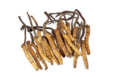 Traditional Chinese Medicine - Cordyceps sinensis. Ingredient used in Traditional Chinese Medicine isolated on white background - Cordyceps sinensis (caterpillar Stock Image