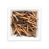 Traditional Chinese Medicine - Ophiocordyceps sinensis (caterpil Stock Image