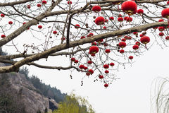 Traditional chinese red lanterns of tree Royalty Free Stock Photo