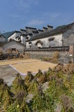 Traditional chinese village with grainfield Stock Images