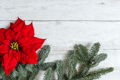 Traditional Christmas background. Traditional Red Christmas flower Poinsettia and fir tree branches on white wood background Stock Photo