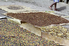 Traditional coffee drying after harvest Stock Photo