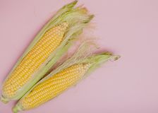 Traditional cooked corn on a blue pink background, close-up. Healthy food concept. Selective focus Stock Photo