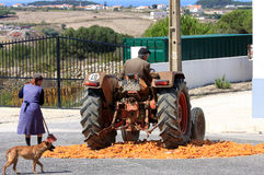 Traditional corn grinding with tractor, Portugal Royalty Free Stock Image