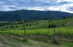 Traditional countryside and landscapes of beautiful Tuscany. Vineyards in Italy. Vineyards of Tuscany, Chianti wine region of Ital. Traditional countryside and royalty free stock image