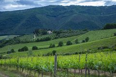 Traditional countryside and landscapes of beautiful Tuscany. Vineyards in Italy. Vineyards of Tuscany, Chianti wine region of Ital royalty free stock photo