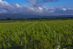 Traditional countryside and landscapes of beautiful Tuscany. Vineyards in Italy. Vineyards of Tuscany, Chianti wine region of Ital. Traditional countryside and stock images