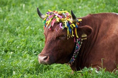 Traditional cow decoration Royalty Free Stock Image
