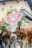 Traditional cow festival in austria Royalty Free Stock Photography