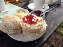 Traditional cream tea. On a plate. Scones, clotted cream and jam with a cup of tea Royalty Free Stock Photos