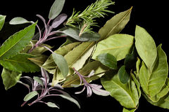 Traditional culinary herbs. Stock Images