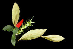 Traditional culinary herbs. Stock Photography